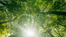 Photograph looking up at the tree canopy in the woods with sun beams coming through